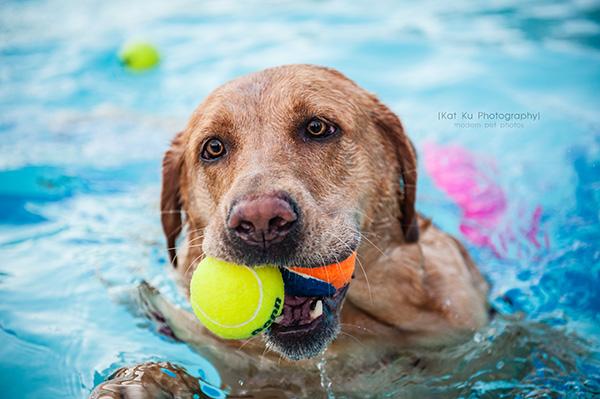 Dog Swim-3 copy