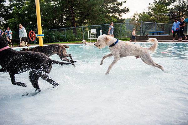 Kat Ku Photography_Ann Arbor Buhr Park_Dog Swim_03