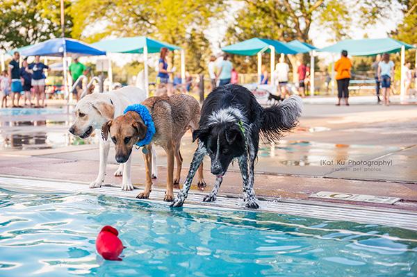 Kat Ku Photography_Ann Arbor Buhr Park_Dog Swim_07