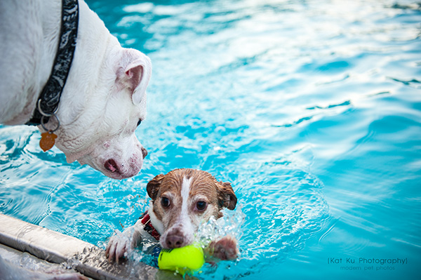 Kat Ku Photography_Ann Arbor Buhr Park_Dog Swim_10