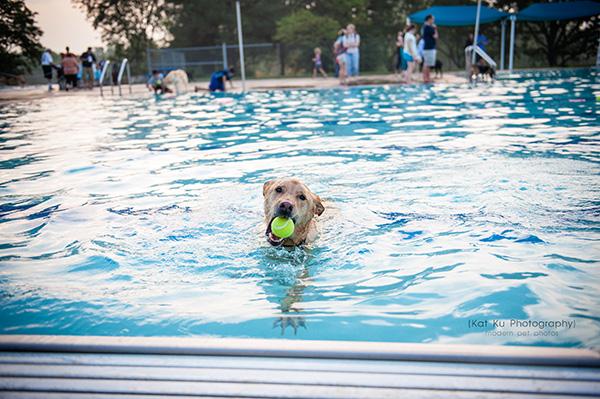 Kat Ku Photography_Ann Arbor Buhr Park_Dog Swim_20