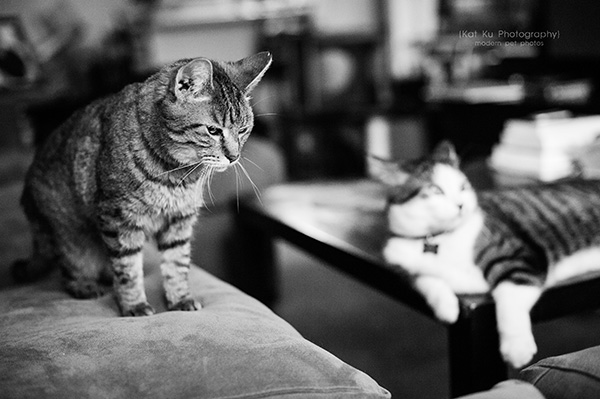 Kat Ku Photography_Lucy and Zappa the Cats_01
