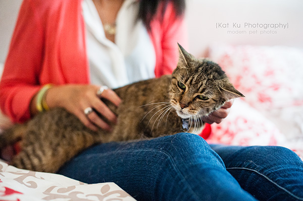 Kat Ku Photography_Lucy and Zappa the Cats_24
