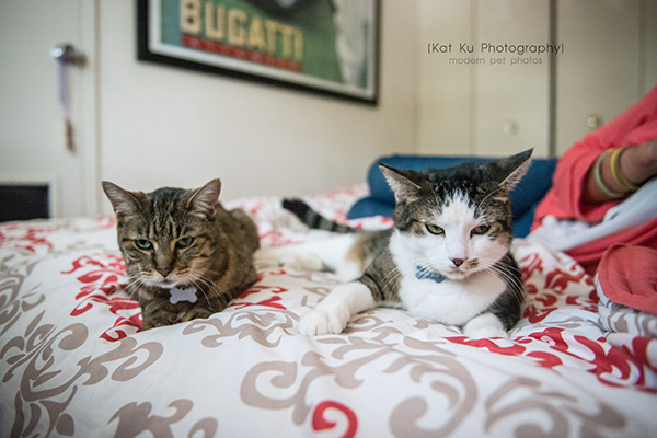 Kat Ku Photography_Lucy and Zappa the Cats_26 (1)