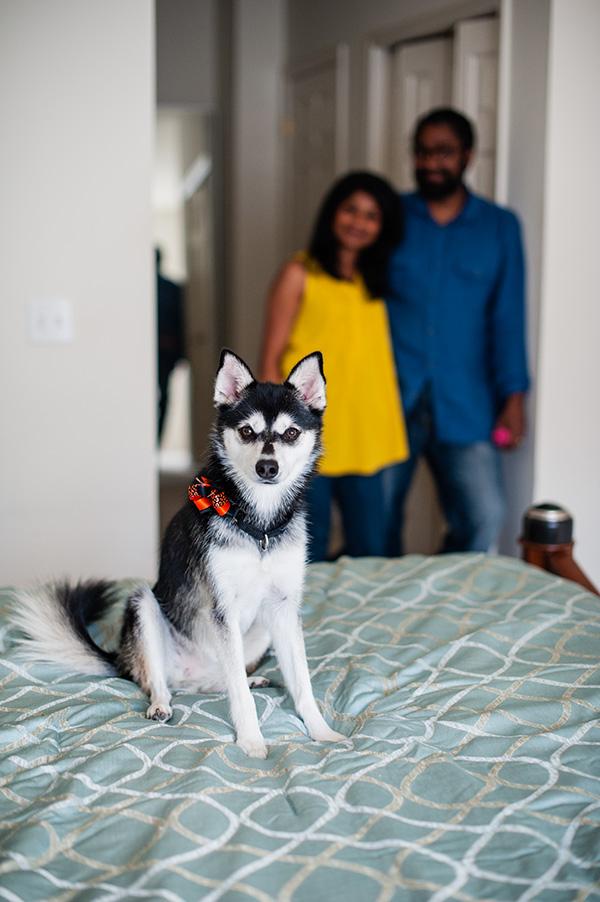 Kat Ku_Troy Pet Photos_Alaskan Klee Klai_05