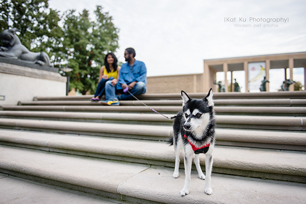 Kat Ku_Troy Pet Photos_Alaskan Klee Klai_15