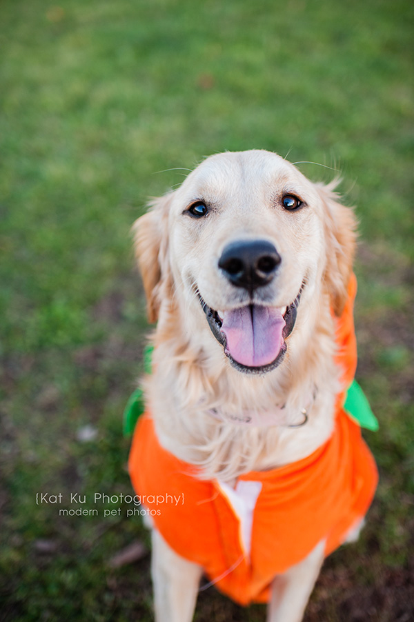 Olsen Dog Park_Kat Ku Photography_Ann Arbor_01