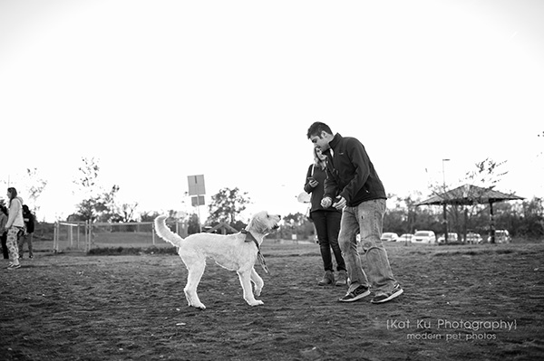 Olsen Dog Park_Kat Ku Photography_Ann Arbor_11