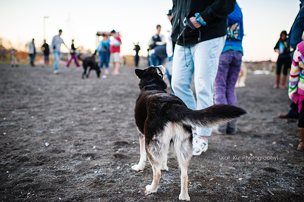 Olsen Dog Park_Kat Ku Photography_Ann Arbor_14