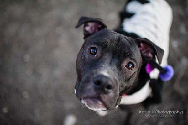 Olsen Dog Park_Kat Ku Photography_Ann Arbor_17