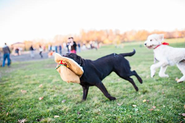 Olsen Dog Park_Kat Ku Photography_Ann Arbor_21