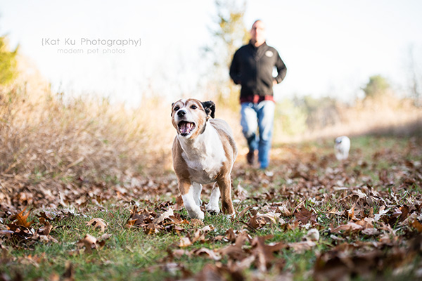 Kat Ku_Brighton Pet Photography_13