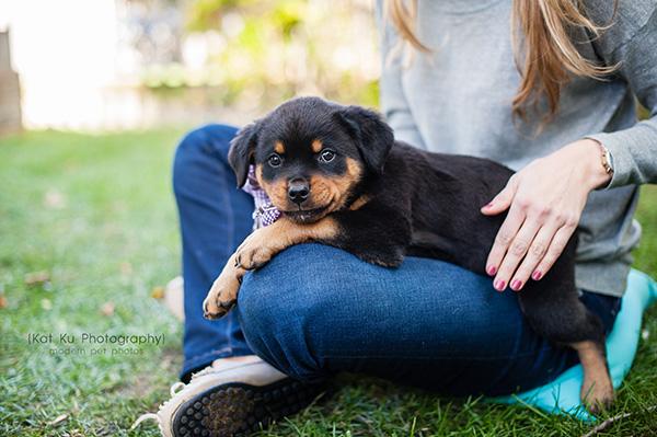 Kat Ku_Gia Rottweiler Puppy_21