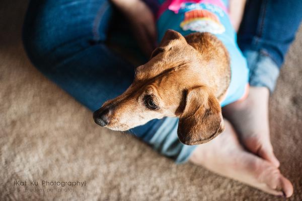 Kat Ku_Noodle_Pet Photography_03