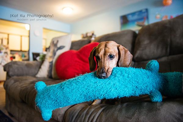 Kat Ku_Noodle_Pet Photography_16