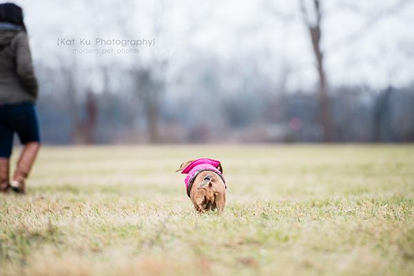 Kat Ku_Noodle_Pet Photography_21