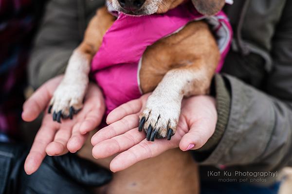 Kat Ku_Noodle_Pet Photography_23