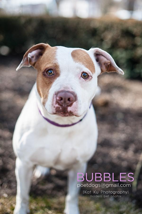 Kat Ku_POET Animal Rescue_Bubbles_04