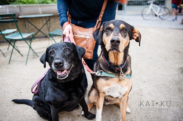 Kat Ku Photography_Dogs of Detroit_Campus Martius_02