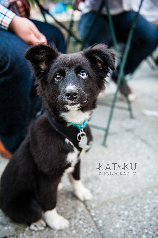 Kat Ku Photography_Dogs of Detroit_Campus Martius_17