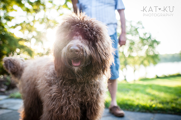 Kat Ku Photography_Ohio Dog_Cosmo_16