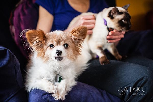 Kat Ku_Ann Arbor Pet Photography_Karly Boy and Poochie_11
