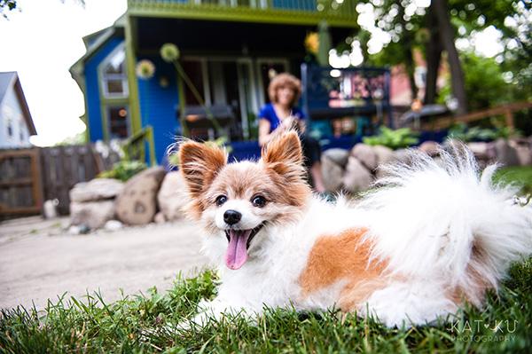 Kat Ku_Ann Arbor Pet Photography_Karly Boy and Poochie_15