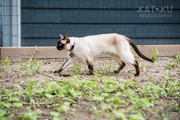 Kat Ku_Ann Arbor Pet Photography_Karly Boy and Poochie_21