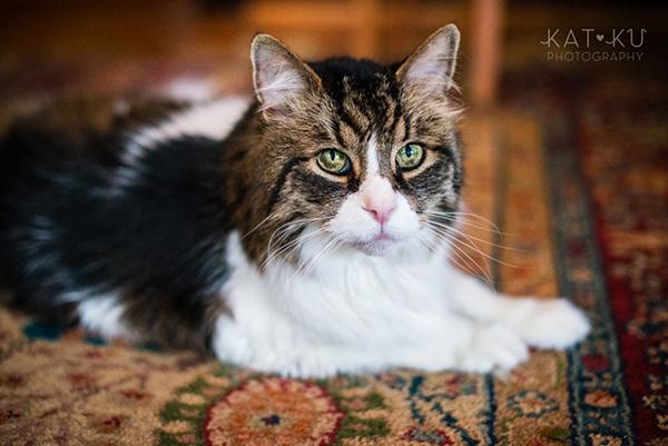 Kat Ku_Sunny_Cat Photography_01