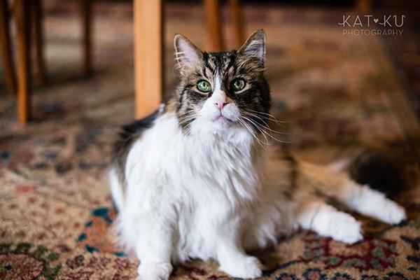 Kat Ku_Sunny_Cat Photography_03