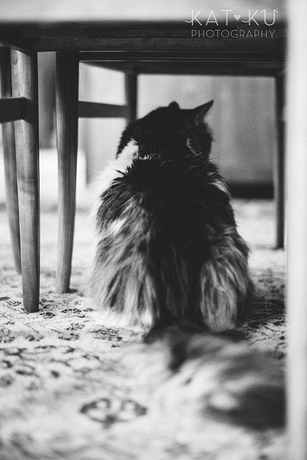 Kat Ku_Sunny_Cat Photography_04