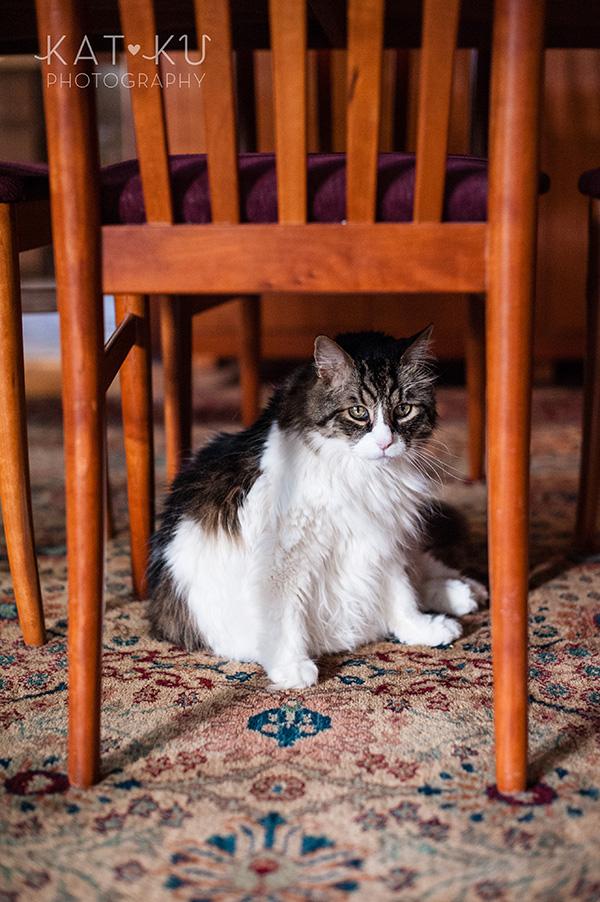 Kat Ku_Sunny_Cat Photography_05