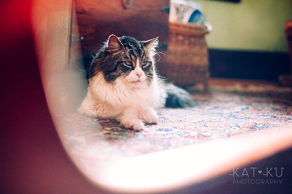 Kat Ku_Sunny_Cat Photography_06