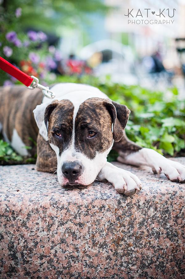 Kat Ku Photography_Detroit Pet Photos_Auggie_16
