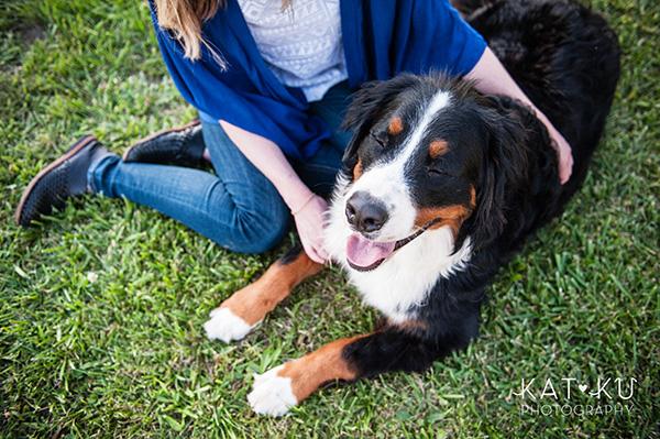 Kat Ku_Bernese Mountain Dog_Detroit Pet Photography_21