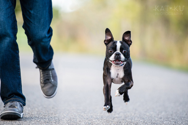 All Rights Reserved_Kat Ku_Franklin Boston Terrier_06