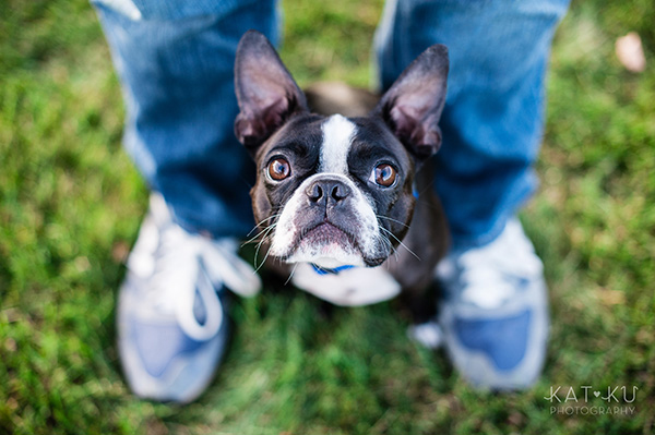 All Rights Reserved_Kat Ku_Franklin Boston Terrier_12