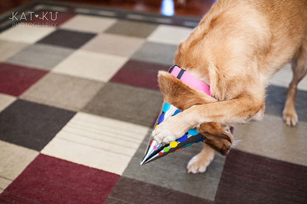 All Rights Reserved_Kat Ku_Puppy Party Birthday Bash_06