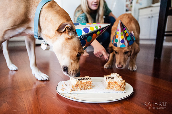 All Rights Reserved_Kat Ku_Puppy Party Birthday Bash_13