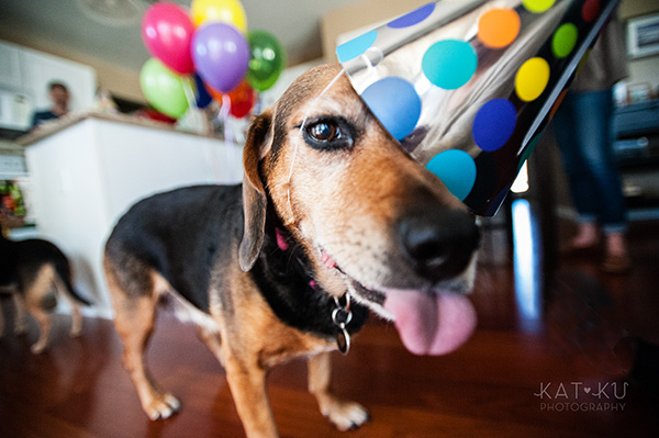 All Rights Reserved_Kat Ku_Puppy Party Birthday Bash_19