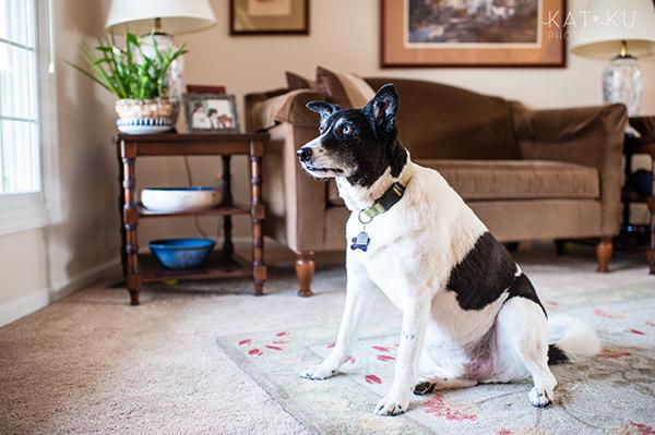 Kat Ku Photography_Ypsilanti_Rescue Dogs_05