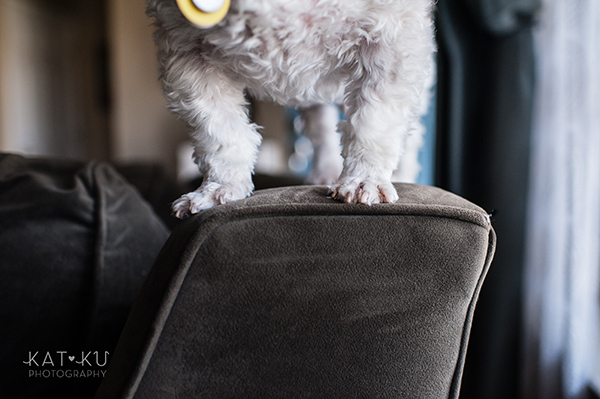 Kat Ku_Mattie and Jinx_Ann Arbor Dog Photography_05