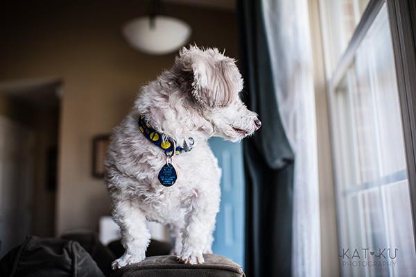 Kat Ku_Mattie and Jinx_Ann Arbor Dog Photography_06