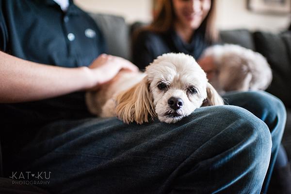 Kat Ku_Mattie and Jinx_Ann Arbor Dog Photography_19