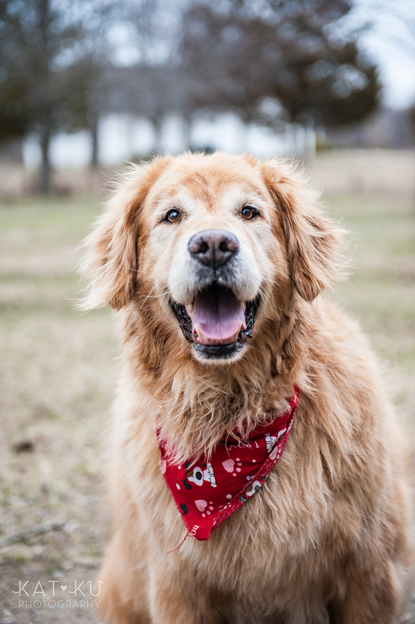 All Rights Reserved_Kat Ku_Dallas Golden Retriever_24