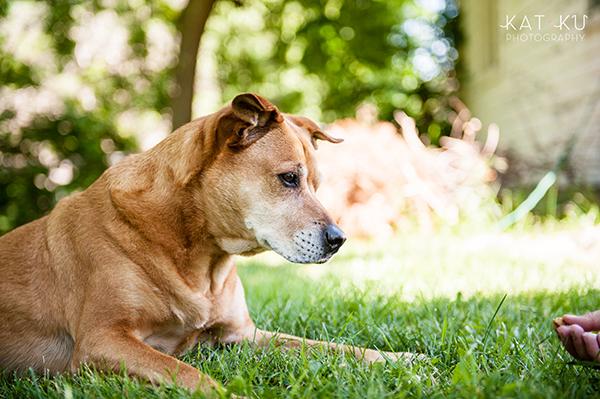 Kat Ku Photography - Michigan Dog Photographer_Baby_10