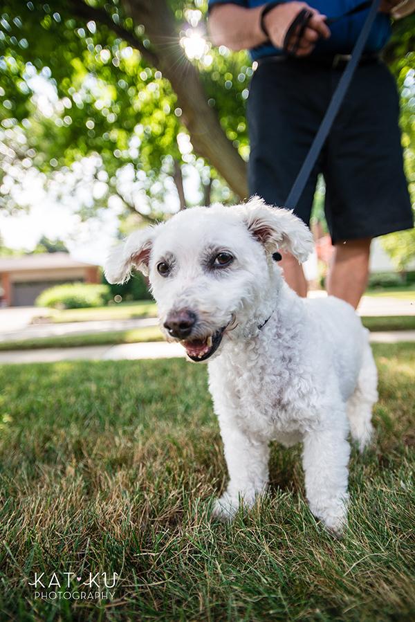 Kat Ku - Royal Oak Pet Photography_10
