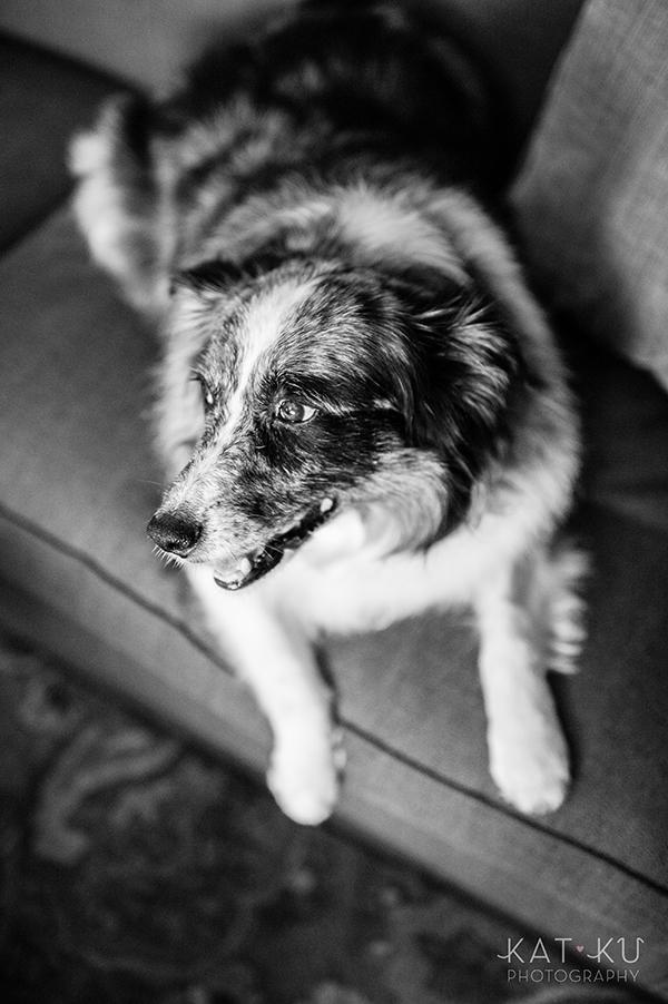kat-ku-sara-australian-shepherd_01