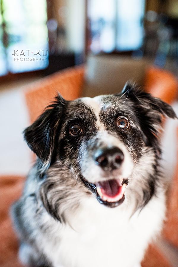 kat-ku-sara-australian-shepherd_07