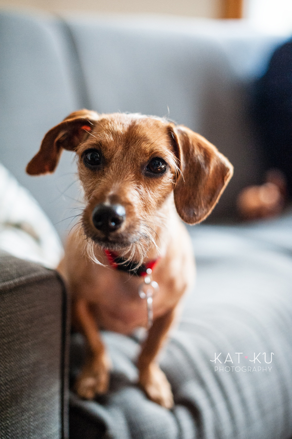 kat-ku-pet-photography-junebug-stanley_01